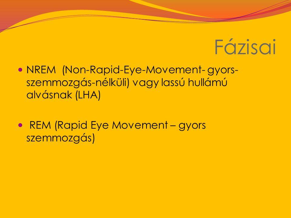 Fázisai NREM (Non-Rapid-Eye-Movement- gyors-szemmozgás-nélküli) vagy lassú hullámú alvásnak (LHA) REM (Rapid Eye Movement – gyors szemmozgás)