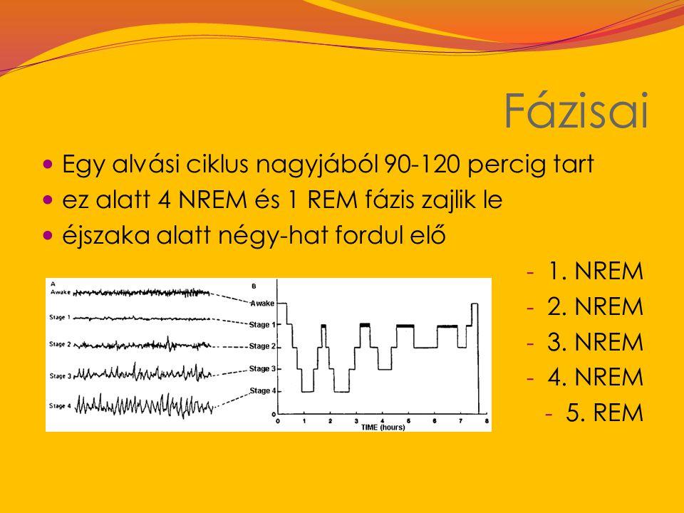 Fázisai Egy alvási ciklus nagyjából 90-120 percig tart