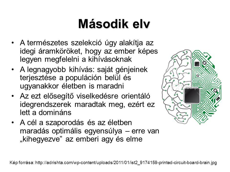 Második elv A természetes szelekció úgy alakítja az idegi áramköröket, hogy az ember képes legyen megfelelni a kihívásoknak.