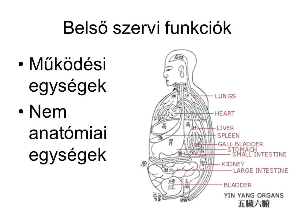 Belső szervi funkciók Működési egységek Nem anatómiai egységek