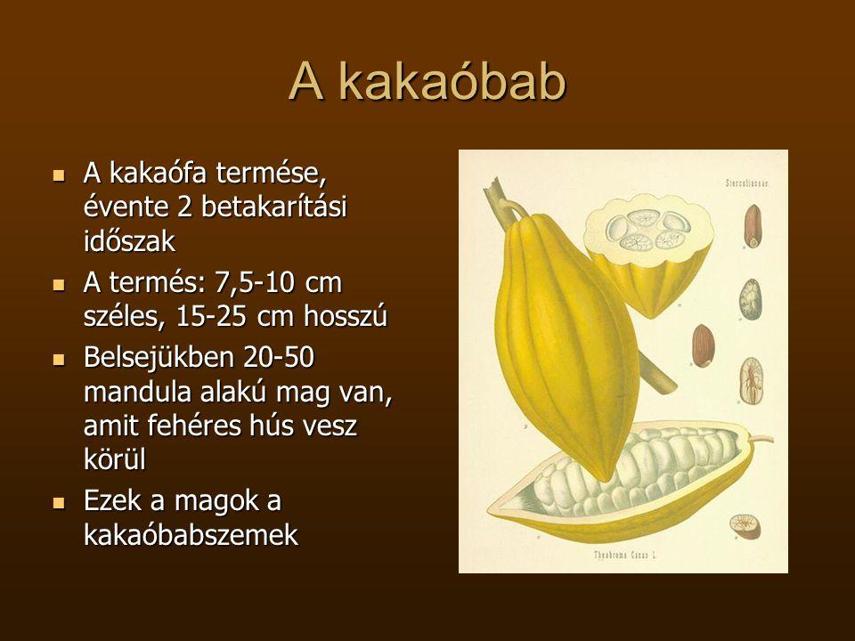 A kakaóbab A kakaófa termése, évente 2 betakarítási időszak