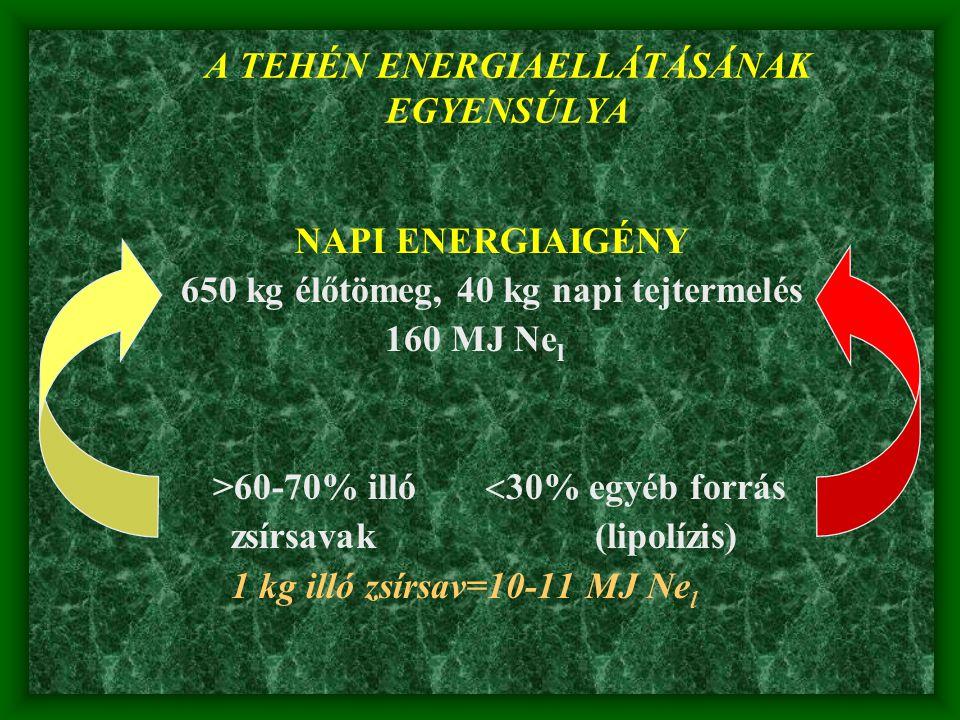 A TEHÉN ENERGIAELLÁTÁSÁNAK EGYENSÚLYA