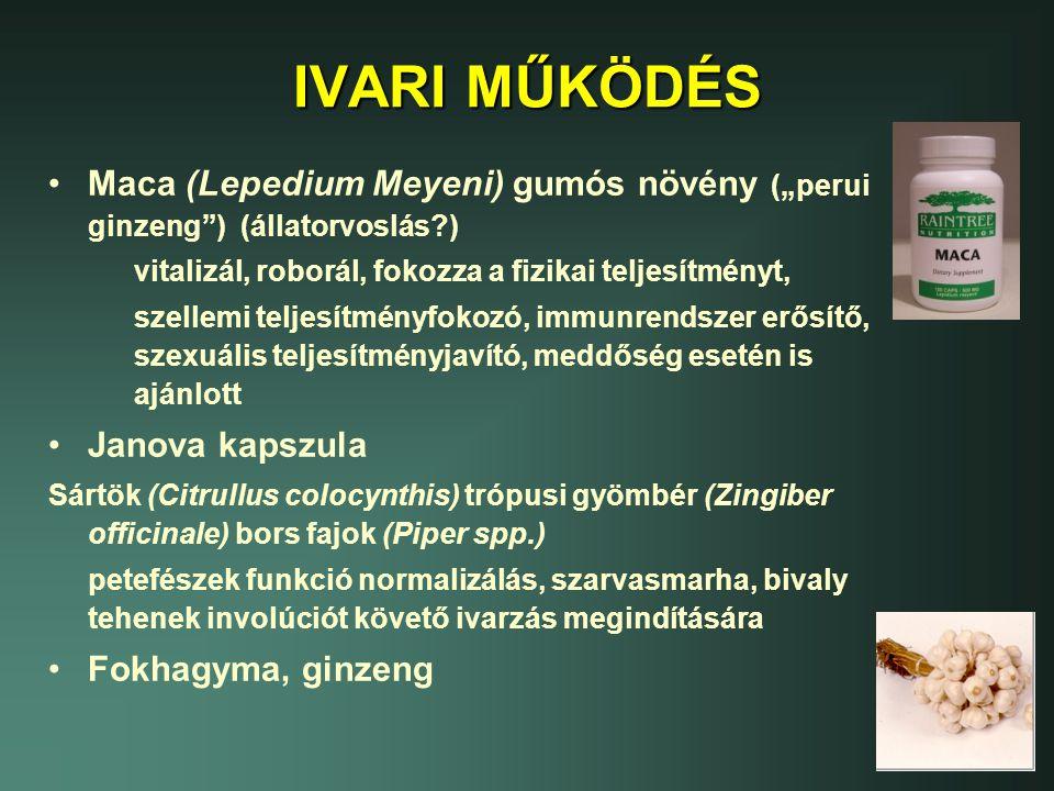 """IVARI MŰKÖDÉS Maca (Lepedium Meyeni) gumós növény (""""perui ginzeng ) (állatorvoslás ) vitalizál, roborál, fokozza a fizikai teljesítményt,"""