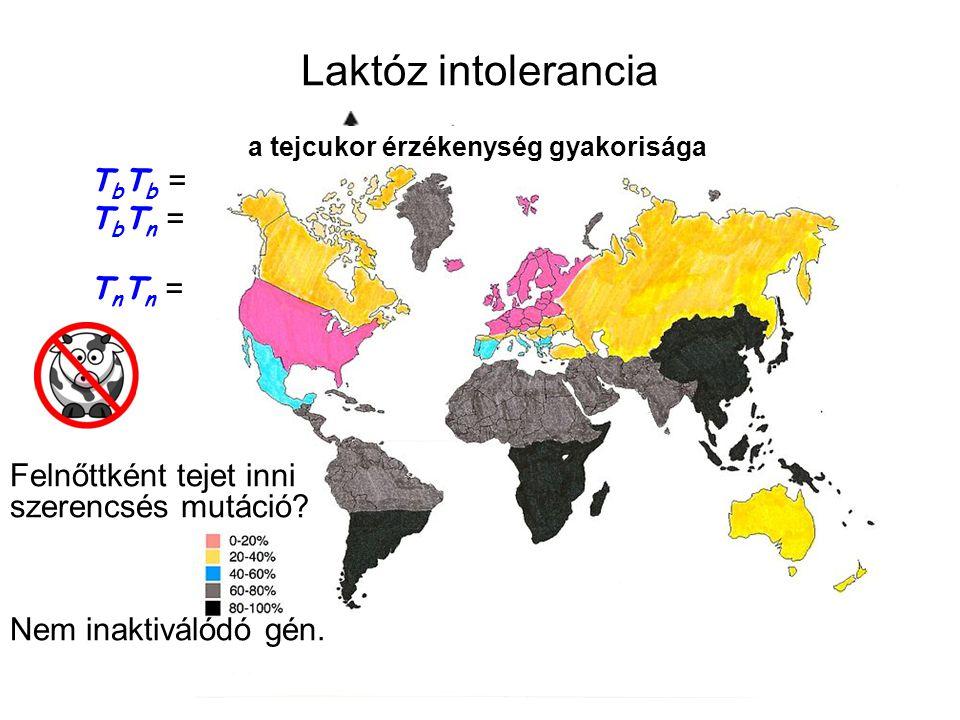 Laktóz intolerancia a tejcukor érzékenység gyakorisága. TbTb = felnőttként is bontja, ezért szereti a tejet.