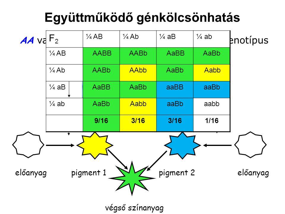 Együttműködő génkölcsönhatás