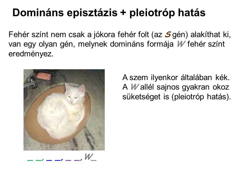 Domináns episztázis + pleiotróp hatás
