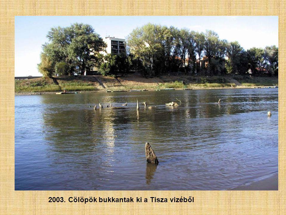 2003. Cölöpök bukkantak ki a Tisza vizéből
