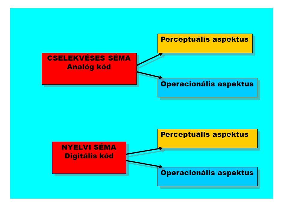 CSELEKVÉSES SÉMA Analóg kód Perceptuális aspektus Operacionális aspektus NYELVI SÉMA Digitális kód