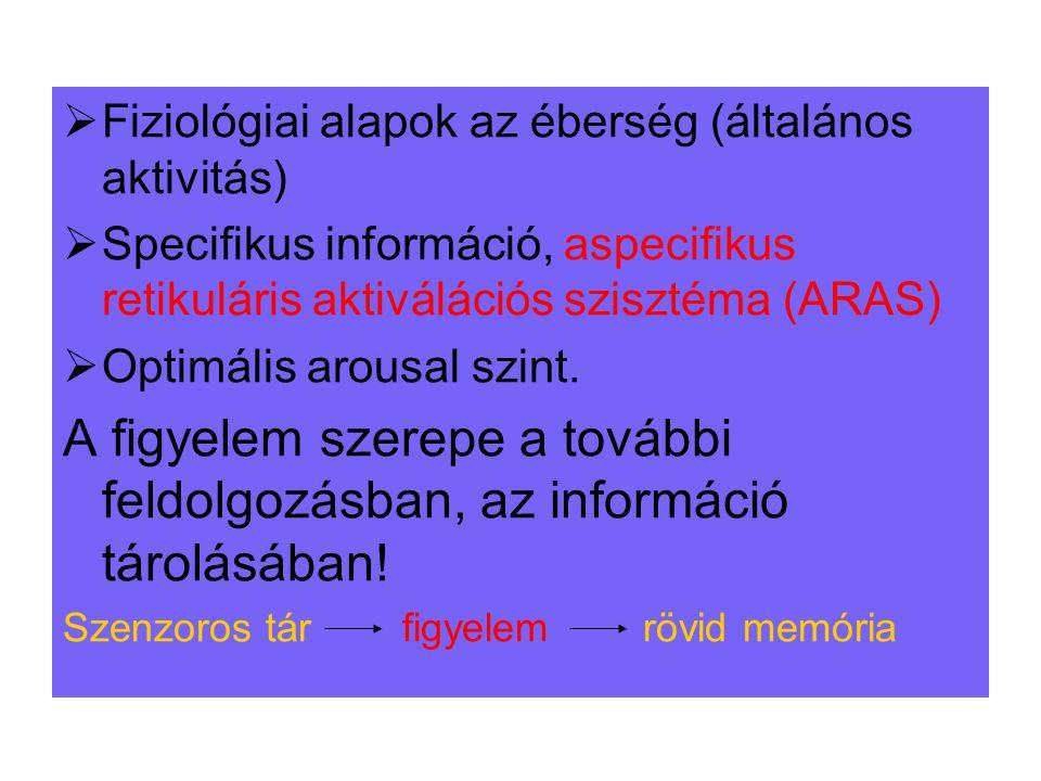 Fiziológiai alapok az éberség (általános aktivitás)