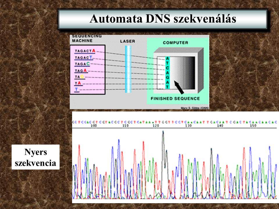 Automata DNS szekvenálás