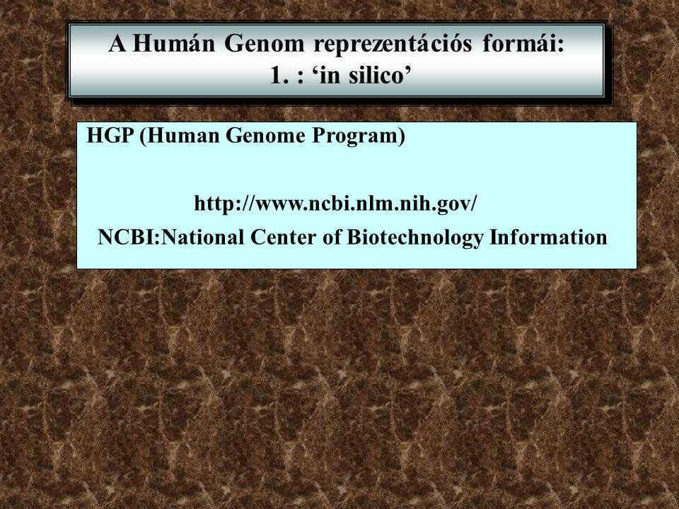 A Humán Genom reprezentációs formái: