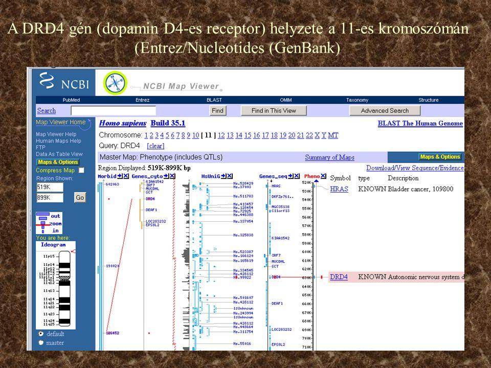 A DRD4 gén (dopamin D4-es receptor) helyzete a 11-es kromoszómán