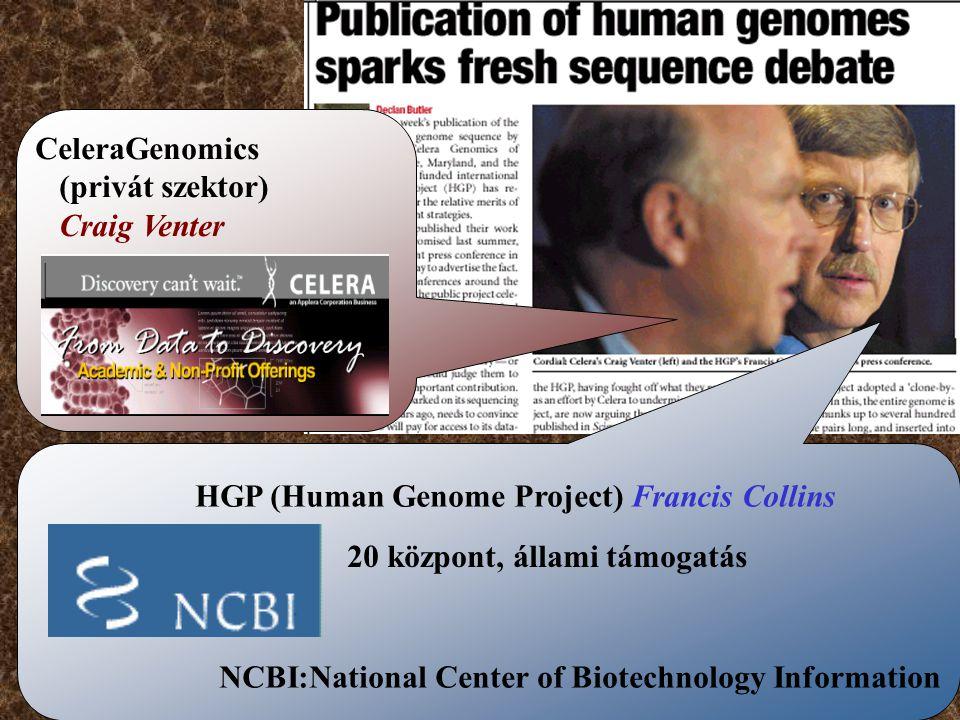 CeleraGenomics (privát szektor) Craig Venter. HGP (Human Genome Project) Francis Collins. 20 központ, állami támogatás.