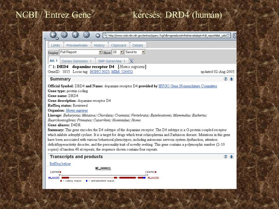 NCBI / Entrez Gene keresés: DRD4 (humán)