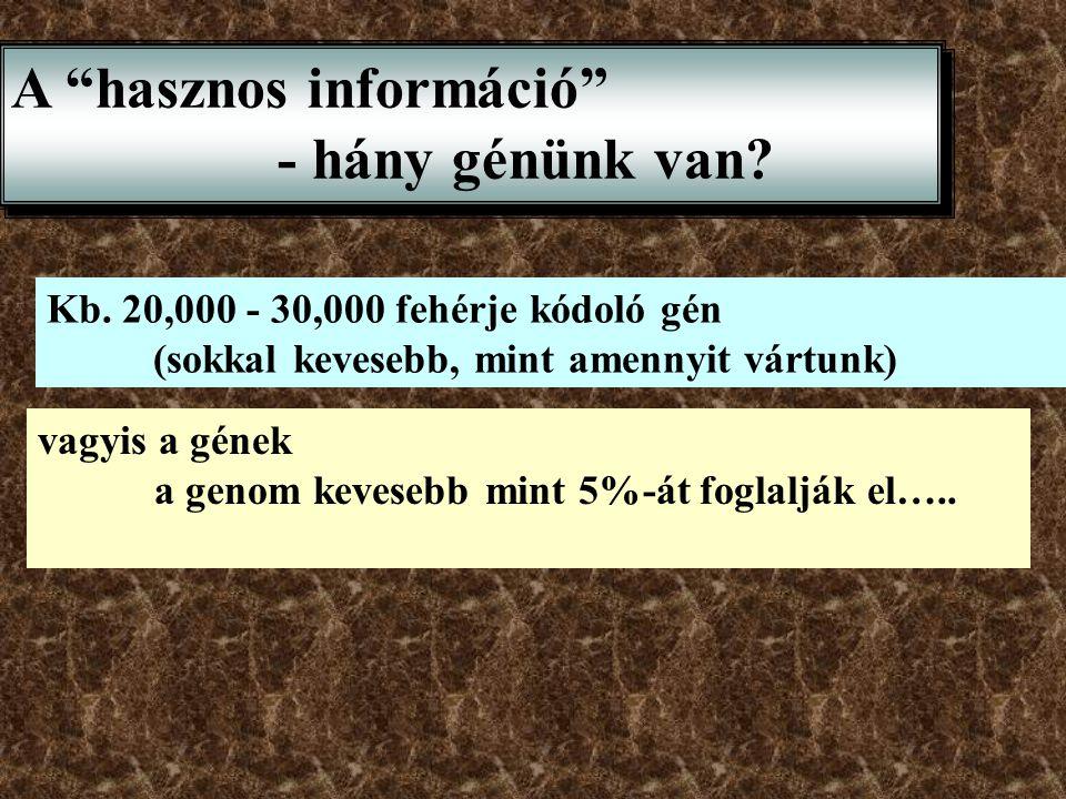 A hasznos információ - hány génünk van