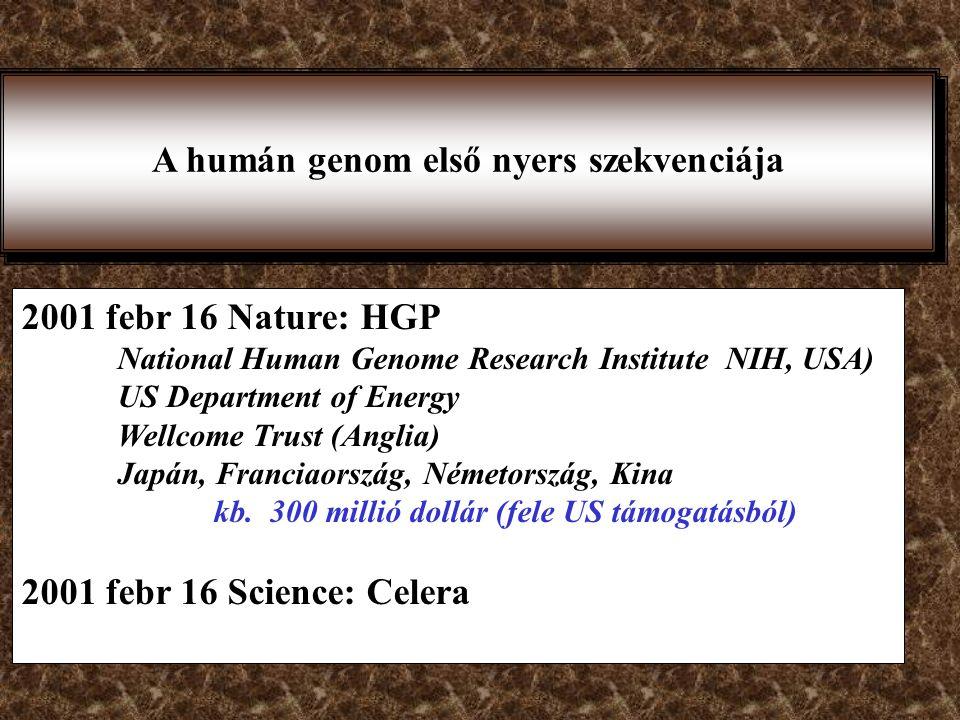 A humán genom első nyers szekvenciája
