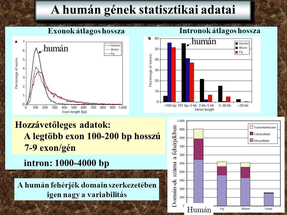 A humán gének statisztikai adatai