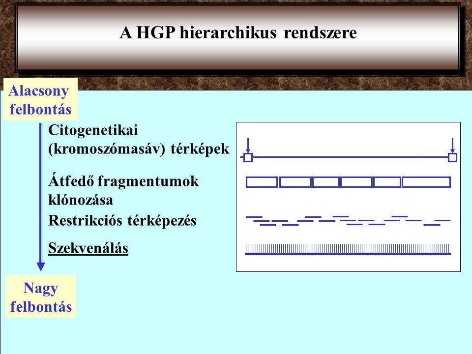 A HGP hierarchikus rendszere