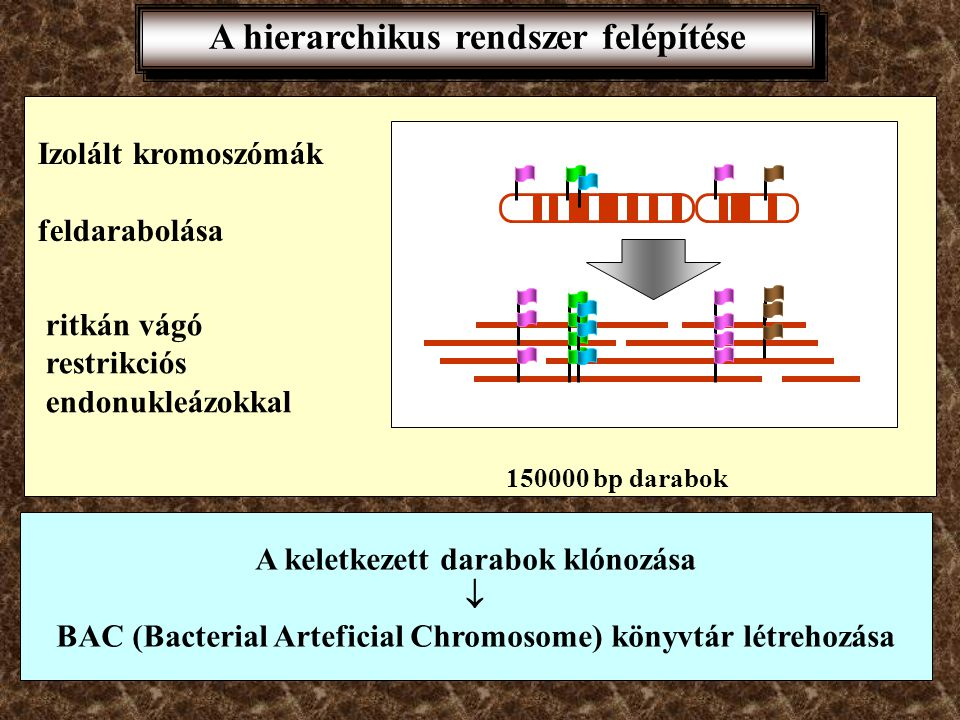 A hierarchikus rendszer felépítése
