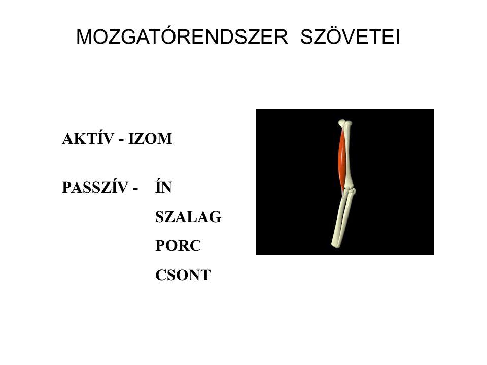 MOZGATÓRENDSZER SZÖVETEI