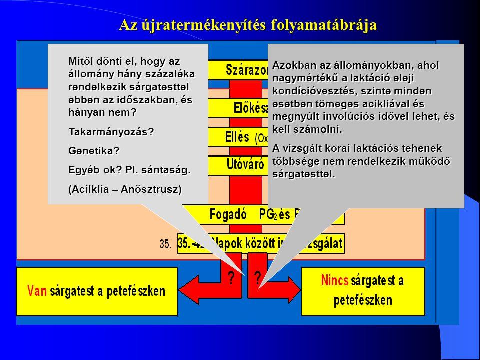 Az újratermékenyítés folyamatábrája