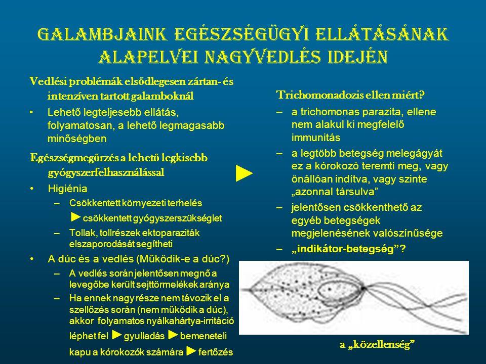 Galambjaink egészségügyi ellátásának alapelvei nagyvedlés idején