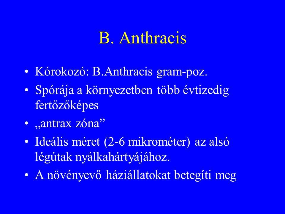 B. Anthracis Kórokozó: B.Anthracis gram-poz.