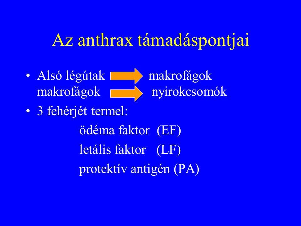Az anthrax támadáspontjai