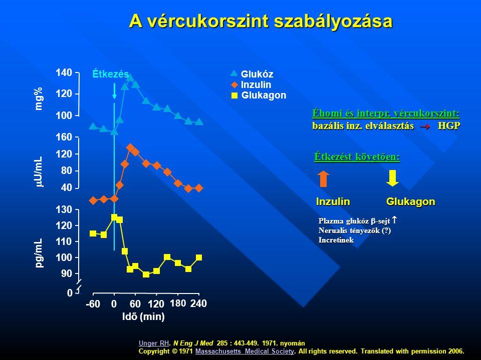 A vércukorszint szabályozása