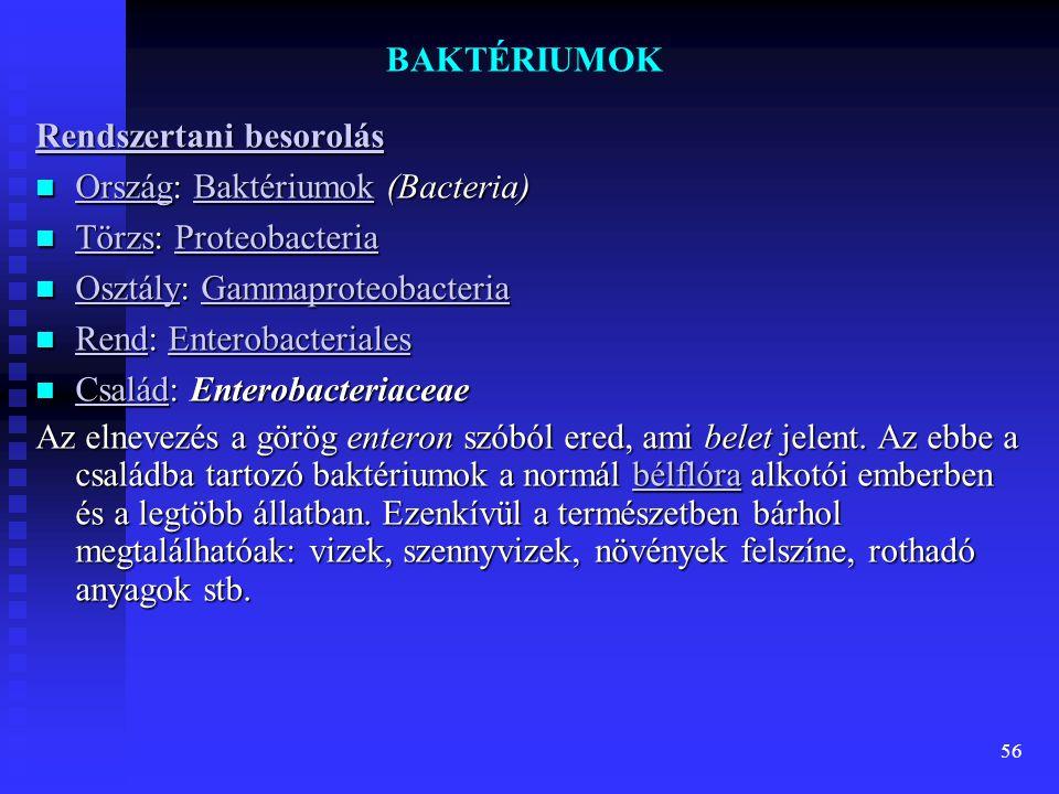 BAKTÉRIUMOK Rendszertani besorolás. Ország: Baktériumok (Bacteria) Törzs: Proteobacteria. Osztály: Gammaproteobacteria.