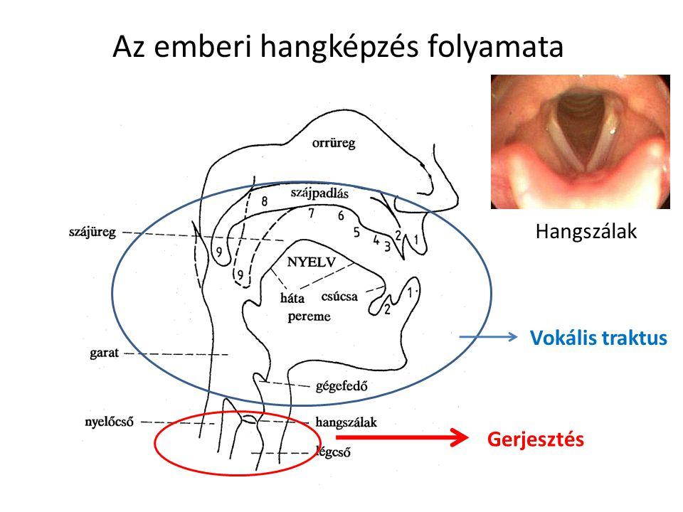 Az emberi hangképzés folyamata
