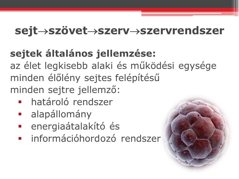 sejtszövetszervszervrendszer