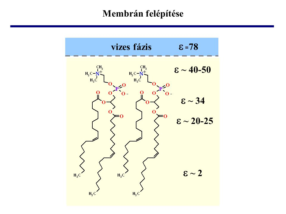 Membrán felépítése e ~ 34 e ~ 40-50 e ~ 20-25 e ~ 2 vizes fázis e =78