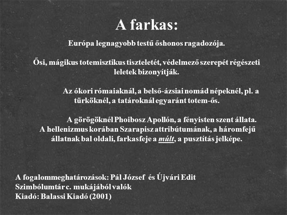 A farkas: