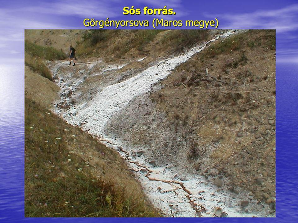 Sós forrás. Görgényorsova (Maros megye)