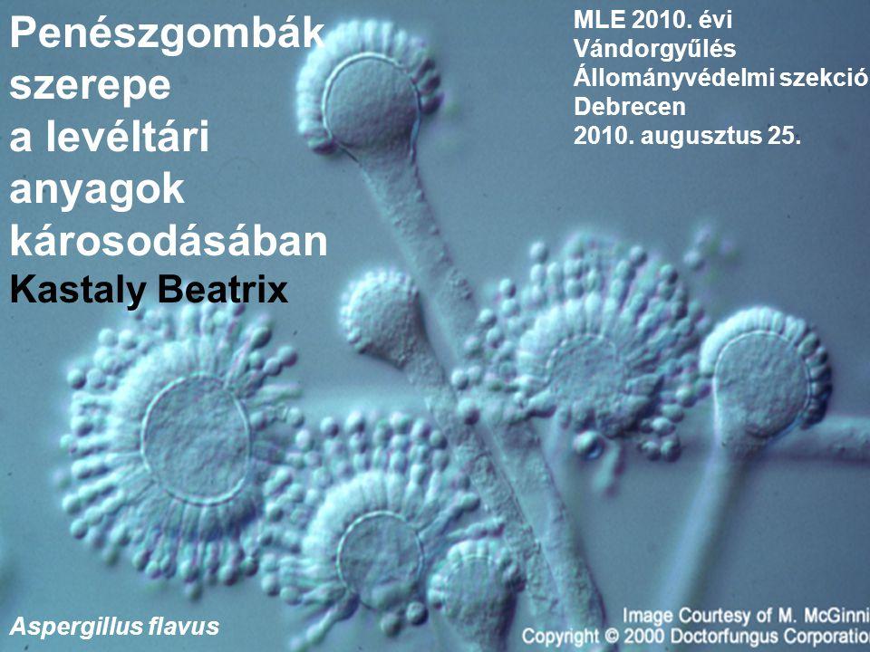 Penészgombák szerepe a levéltári anyagok károsodásában Kastaly Beatrix