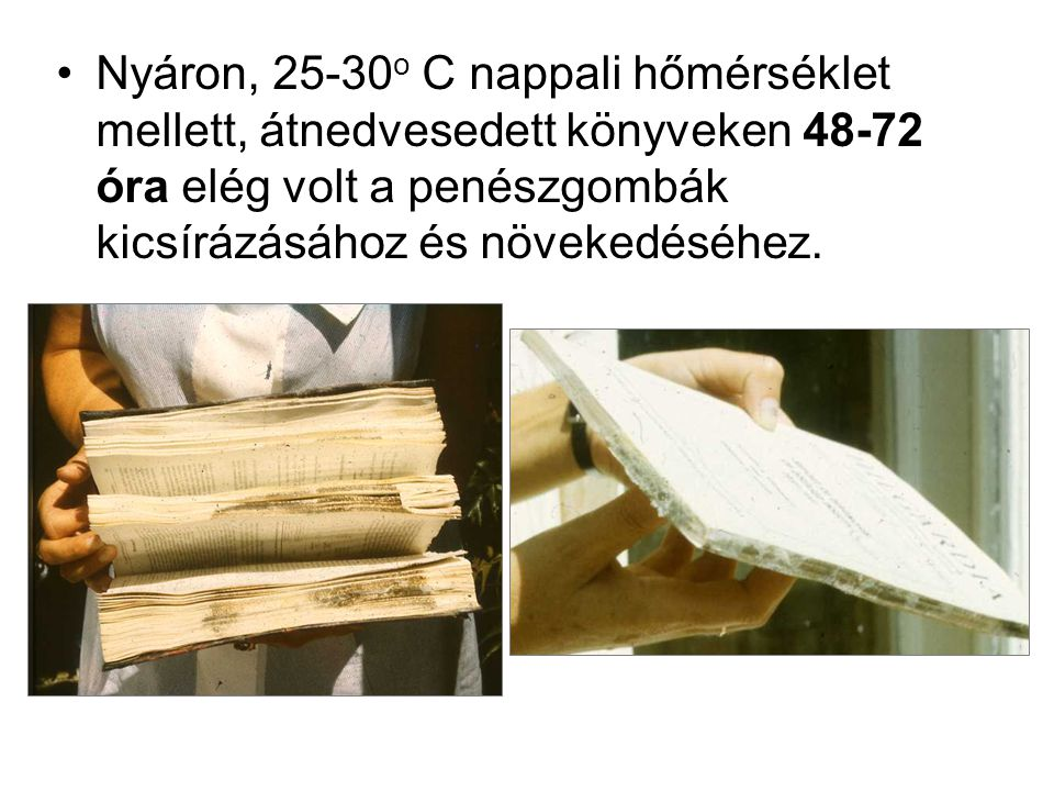 Nyáron, 25-30o C nappali hőmérséklet mellett, átnedvesedett könyveken 48-72 óra elég volt a penészgombák kicsírázásához és növekedéséhez.