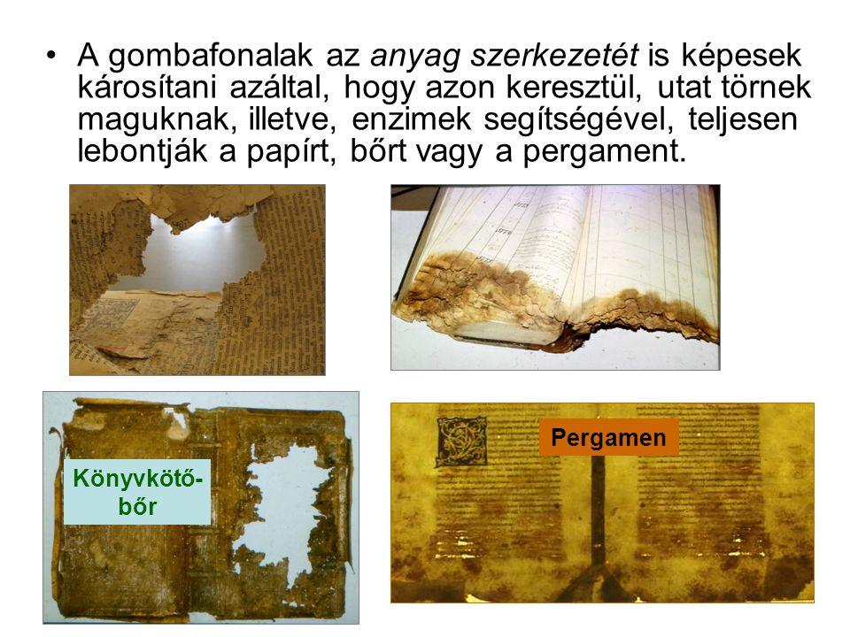 A gombafonalak az anyag szerkezetét is képesek károsítani azáltal, hogy azon keresztül, utat törnek maguknak, illetve, enzimek segítségével, teljesen lebontják a papírt, bőrt vagy a pergament.