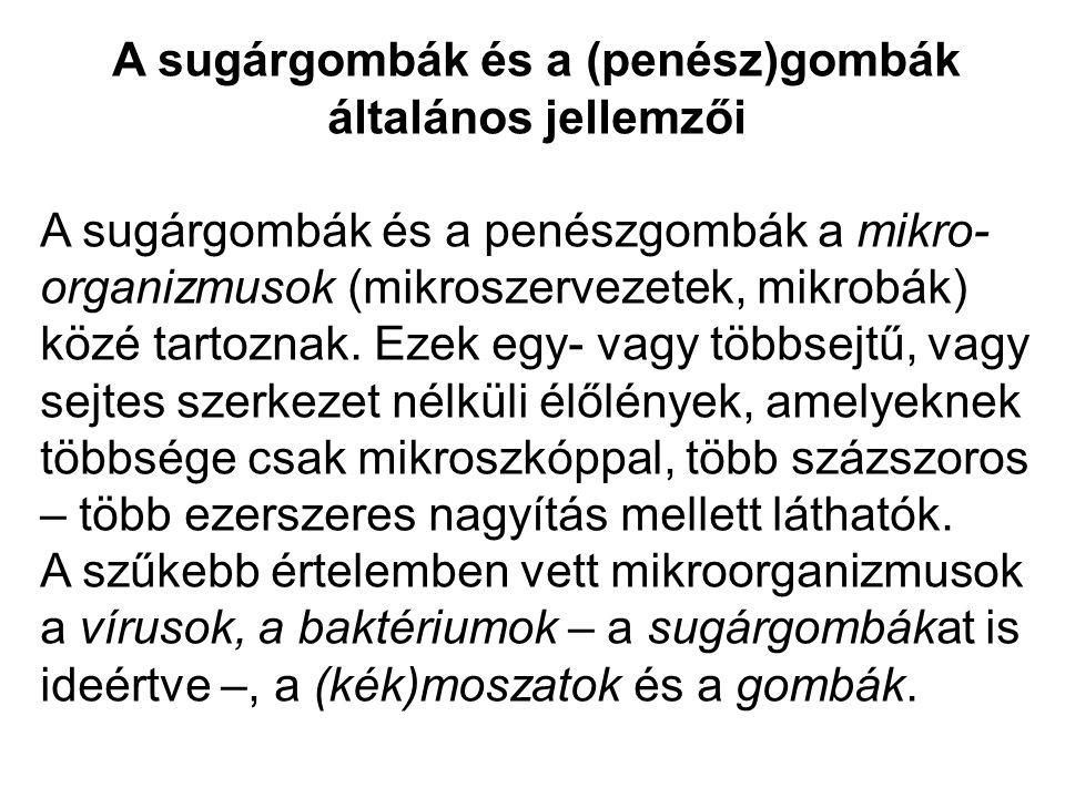 A sugárgombák és a (penész)gombák általános jellemzői