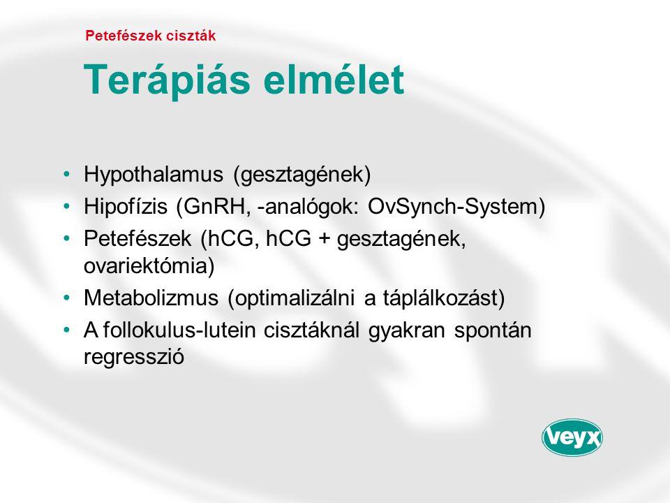Terápiás elmélet Hypothalamus (gesztagének)
