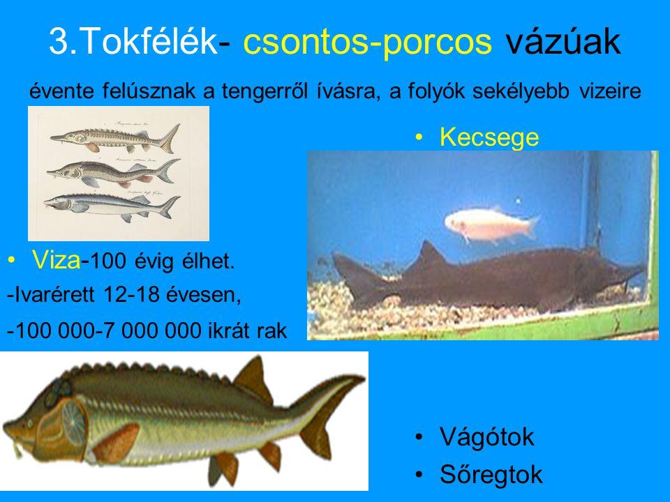 3.Tokfélék- csontos-porcos vázúak évente felúsznak a tengerről ívásra, a folyók sekélyebb vizeire
