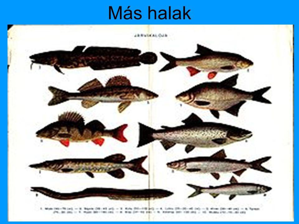 Más halak