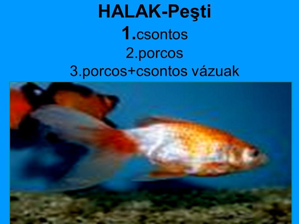 HALAK-Peşti 1.csontos 2.porcos 3.porcos+csontos vázuak