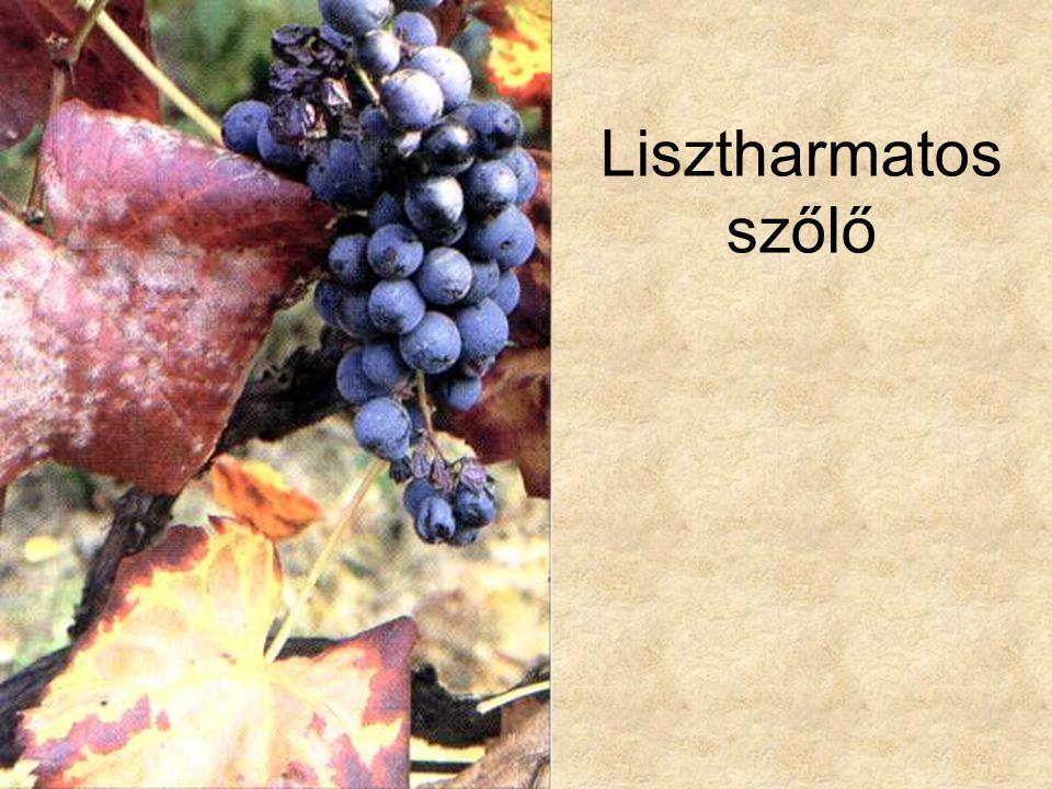 Lisztharmatos szőlő Simon-Seregélyes: Növényismeret, Nemzeti Tankönyvkiadó, 1998.