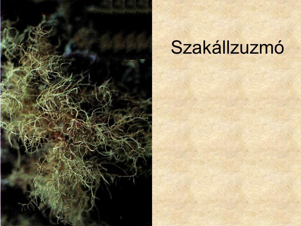 Szakállzuzmó Kremer-Muhle: Zuzmók, mohák és harasztok, Magyar könyvklub Természetkalauz sorozat
