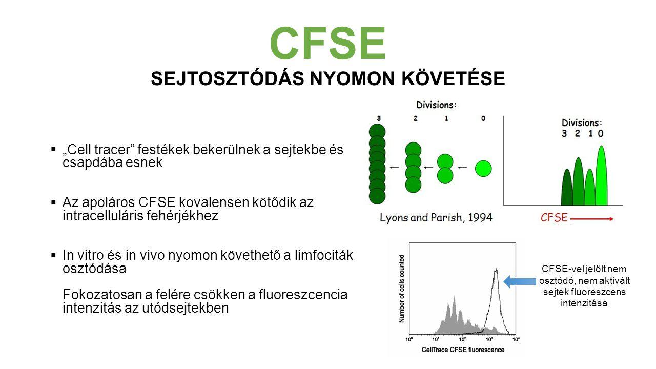 CFSE SEJTOSZTÓDÁS NYOMON KÖVETÉSE