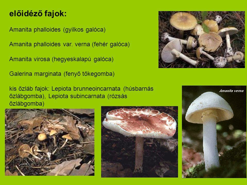 előidéző fajok: Amanita phalloides (gyilkos galóca)