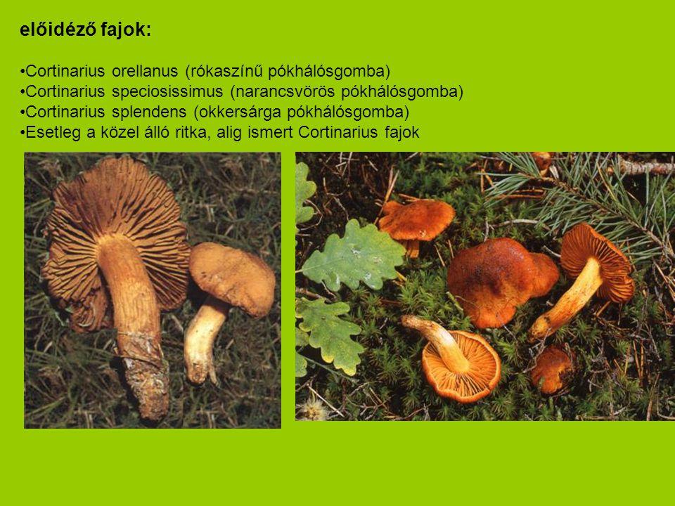 előidéző fajok: Cortinarius orellanus (rókaszínű pókhálósgomba)
