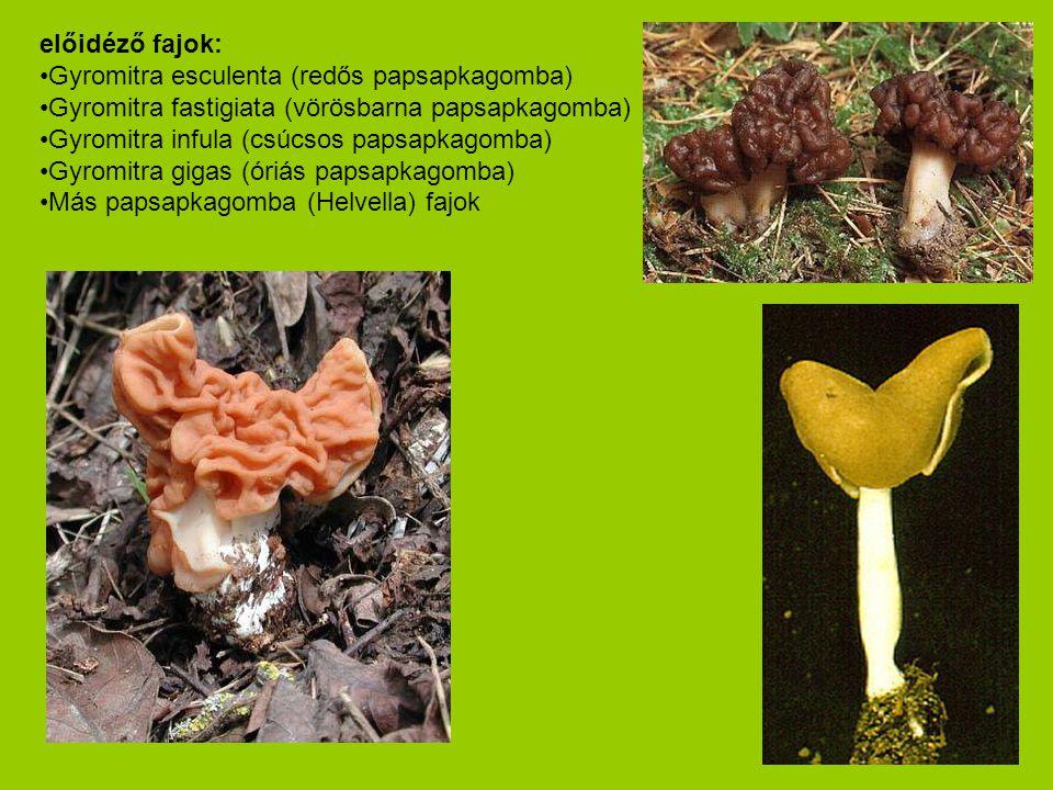 előidéző fajok: Gyromitra esculenta (redős papsapkagomba) Gyromitra fastigiata (vörösbarna papsapkagomba)