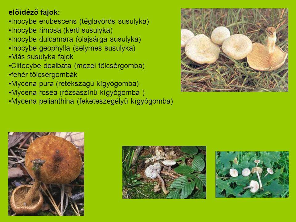 előidéző fajok: Inocybe erubescens (téglavörös susulyka) Inocybe rimosa (kerti susulyka) Inocybe dulcamara (olajsárga susulyka)